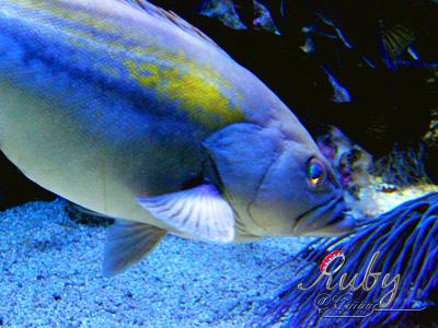 Monaco_aquarium_fish