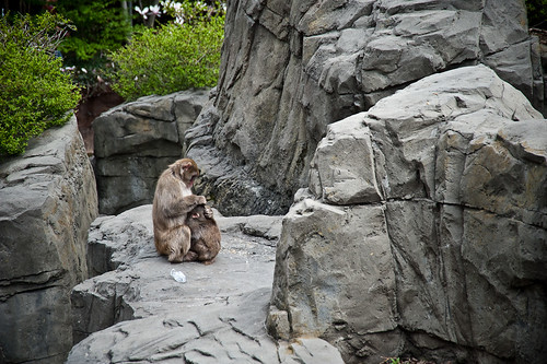 Central_Park_Zoo-11