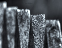 Fence  (mortenprom) Tags: wood bw abstract black texture oslo norway closeup architecture fence garden norge woodwork wooden gate day dof bokeh skandinavien gray terrasse norwegen pole explore april noruega tele extension scandinavia 2009 bygdy noorwegen noreg extensiontube skandinavia kenko kenkoextensiontubes ef70200mmf4lusm abigfave canoneos40d mortenprom