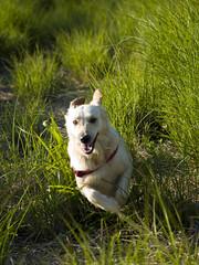 Corre Forest, corre!! (Osomoso - ) Tags: parque valencia perro feliz velocidad cabecera diversin correr maleza parquedecabecera