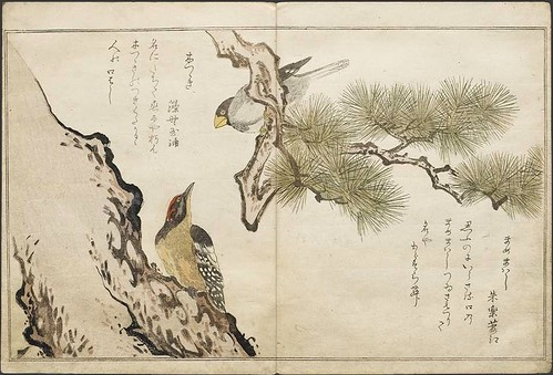 Woodpecker + Japanese Grosbeak (Mammemawashi)
