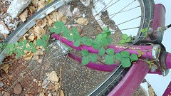 Tied naturally. (Swaamy_Questor) Tags: macro using settings