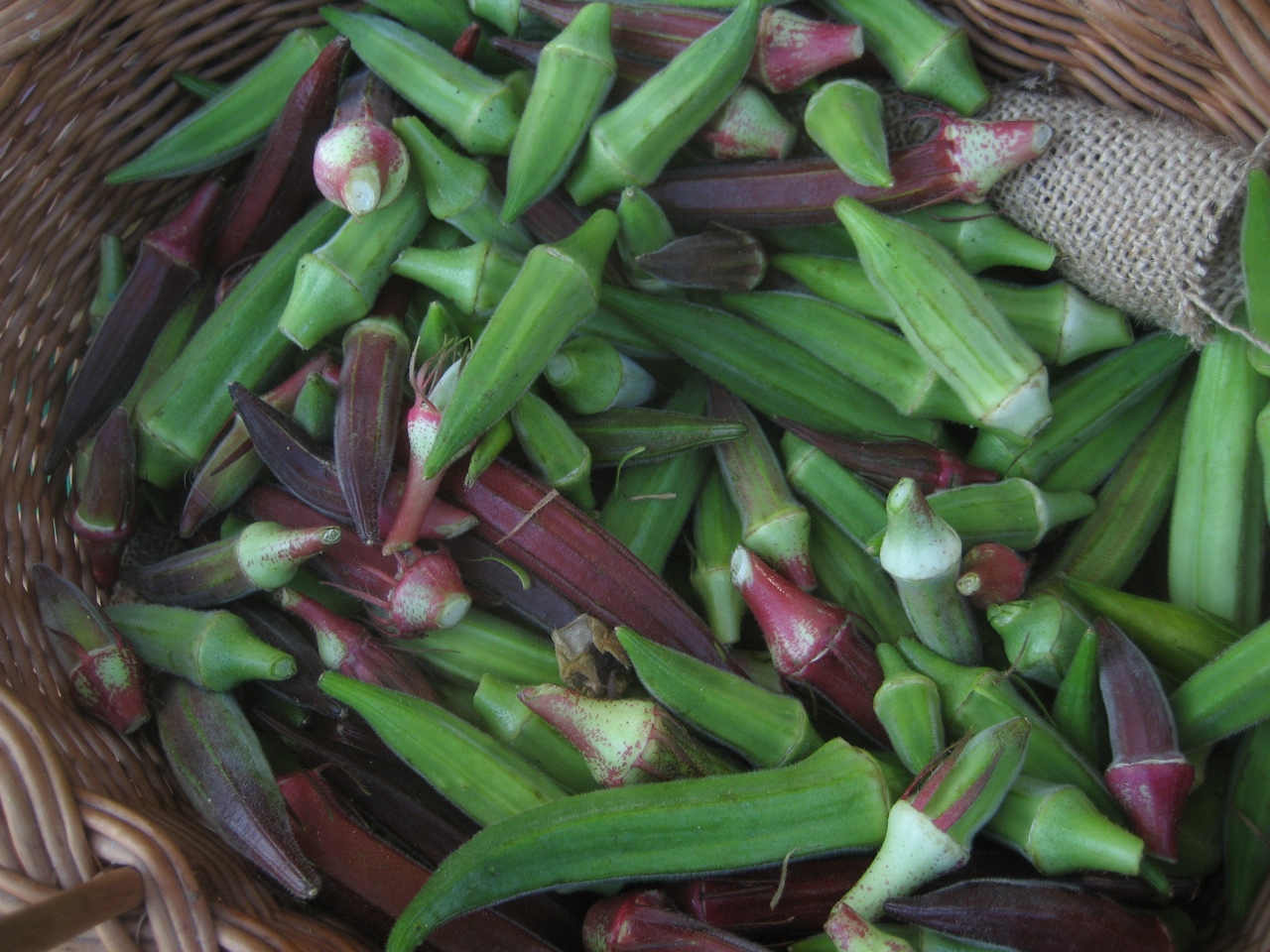 Mixed Okra