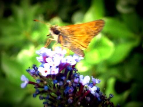 Holga butterfly