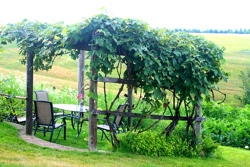 Grape Arbor in Star Valley