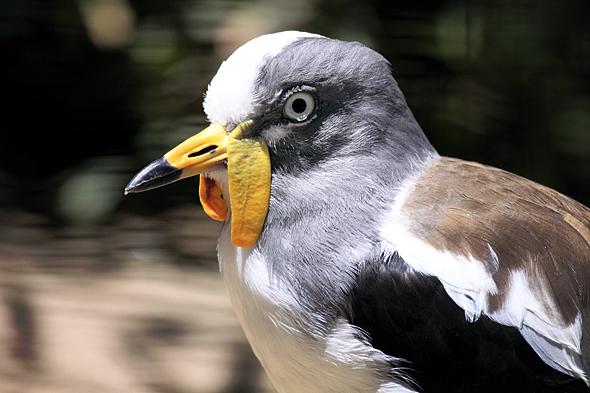 080709_birdGibblet