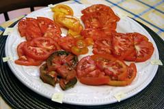 tomato taste test 1