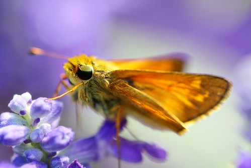 Warning - moths and flowers are furrier up close than they appear