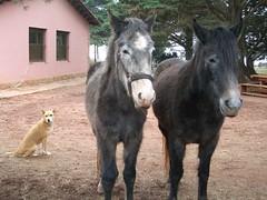 dog, horse, horse