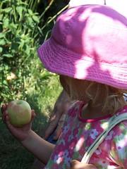 Q3 apple