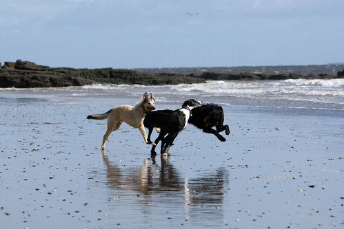 Lurchers do Happy