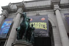 美國自然史博物館(American Museum of Natural History)位於紐約中央公國西側的博物館已建立將近150年,以豐富的化石、標本,還有擬真模形著稱