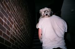 (TALENA SANDERS) Tags: summer film puppy allie manhattan levi 2009 carry sillyface talenasanders