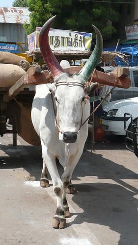 Madurai 061