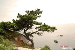 (Shimmi Erick) Tags: sea lighthouse tree nature