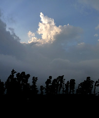 forest silhouette (com4tablydumb) Tags: india tourism nature trek scenery wildlife hills uttaranchal himalayas monal northernindia uttarakhand tungnath chopta monalpheasant alpinehabitat