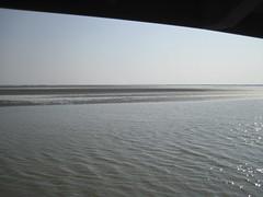 IMG_0334 (xxxbb) Tags: 七股 曾文溪出海口 黑面鵯鷺