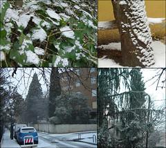 nieve en madrid (La Manigua) Tags: madrid plants snow tree ice arbol lluvia spain agua plantas nieve hielo