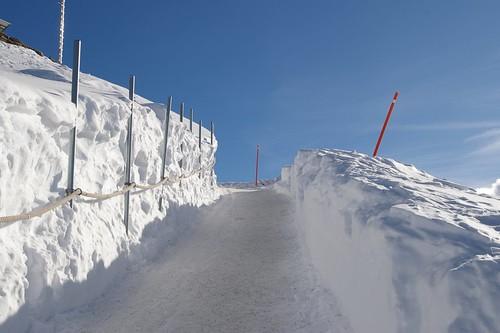 要上看台的冰路