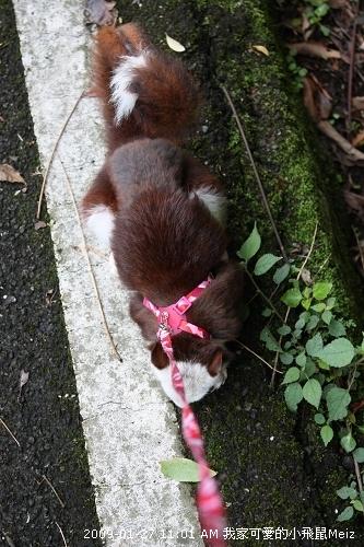 09春節小飛鼠Meiz的花蓮行 (3).JPG