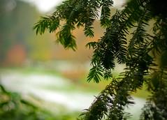 Bournemouth Gardens (---Pinchy---) Tags: gardens bournemouth niftyfifty ilovebokeh msh020912 msh0209