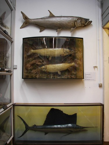 The big fish wall