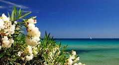 Porto Frailis - fiori (smokejumping) Tags: sardegna flowers sea summer italy holiday beach nikon mare sardinia estate fiori 2008 spiaggia italie ogliastra d80 sergiocanobbio gettyimagesitalyq1