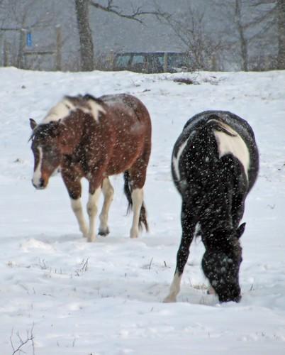 snowy horse photo by Adrienne in Ohio