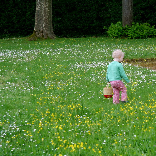 Boboli's Daisy and Buttercup Field