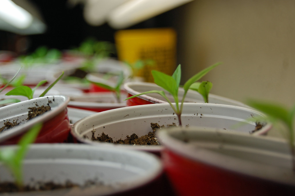 Seedlings 042209-02