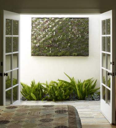 flora grubb: succulent wall