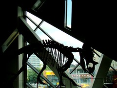 (= Steph =) Tags: toronto window silhouette 2008 rom dinosaurbones bloorstreet