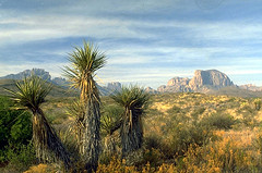 Yucca and Chisos