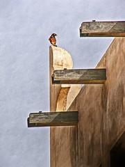 Bird on the watch