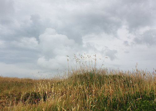 Long grass, Pen Dinas