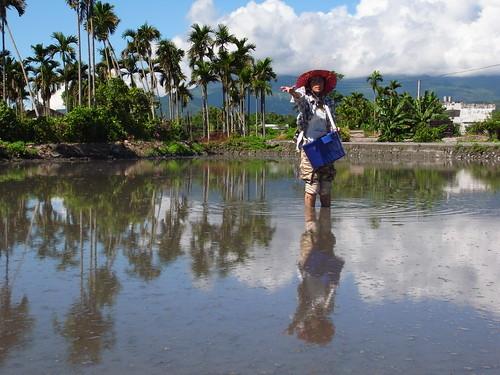 鳳林自然農田 稻種直播