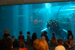 In the shark tank, Oregon coast Aquarium