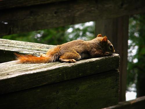 nutjob sunbathing