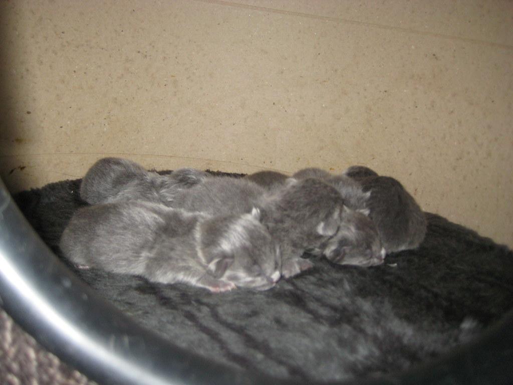 Duszka gave birth 3817234431_eca5631460_b