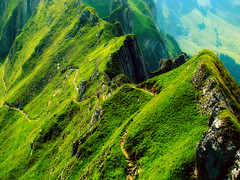 Wild beauty (ceca67) Tags: wild summer mountain green nature switzerland path wandern sntis greatphoto coth mywinners picturefantastic 100commentgroup flickrclassique flickrvault coth5 trolledproud