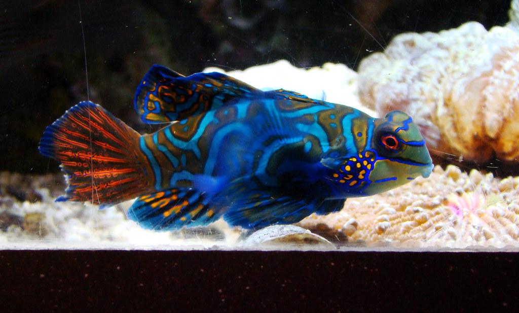DSC01950 Monterey Bay Aquarium