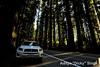 ADS_USA_000002645 (dickysingh) Tags: travel trees usa india west nature car tour outdoor roadtrip aditya redwoods redwoodnationalpark singh dicky adityasingh ranthamborebagh theranthambhorebagh wwwranthambhorecom