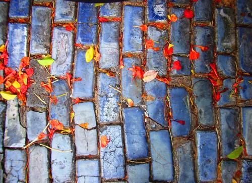 Hojas rojas sobre adoquin azul