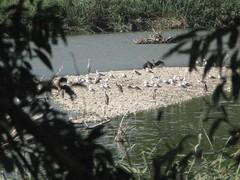 Grande affollamento: ora anche cormorani e gabbiani