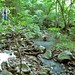 river crossing in the jungle