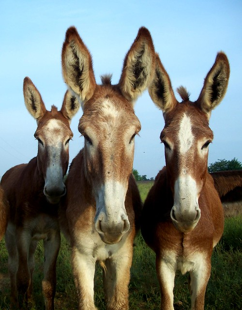 The Jurga Report: three mules by Jo Naylor