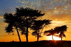 Santa Barbara cypress (Andy Kennelly) Tags: blue trees sunset orange sun silhouette santabarbara clouds table cypress rays bestofmywinners