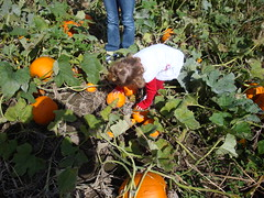 Lilliann Looking For A Pumpkin