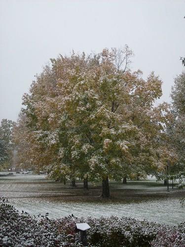 Snowtree II