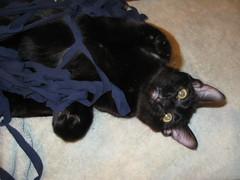 T-shirt yarn w cat hair